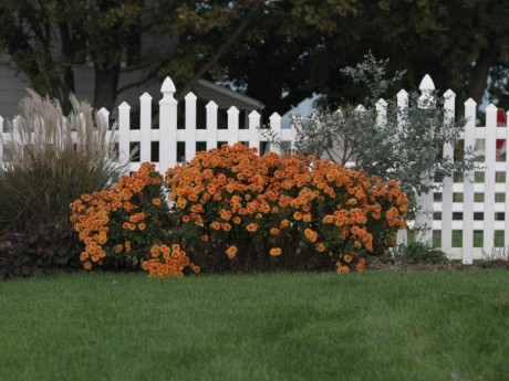 White Scalloped Picket Fence